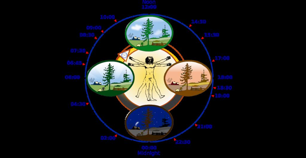 Het circadiaans ritme